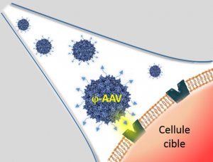 Glyco-coated virus for gene therapy
