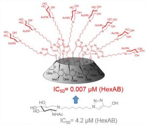 CORAIL - Multivalency hexosaminidase