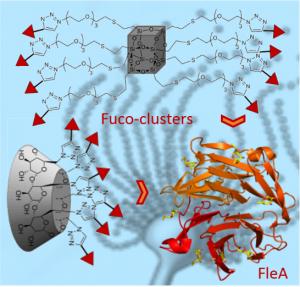 CORAIL - Multivalent fucosides with nanomolar affinity for the Aspergillus fumigatus lectin FleA prevent spore adhesion to pneumocytes