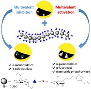 CORAIL - Polymeric iminosugars