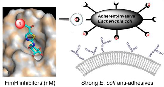 CORAIL - Thiazolylaminomannosides e coli
