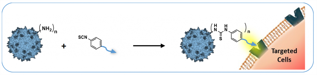 Chemical modification of the adeno-associated virus capsid to improve gene delivery