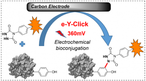 Electrochemically promoted tyrosine-click-chemistry for protein labelling