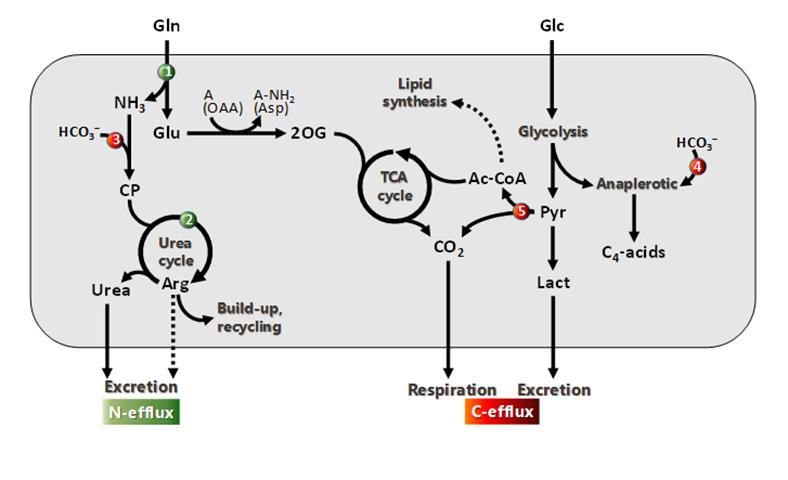 MIMM-Isotopomics-14b